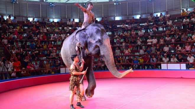 Về việc 'cấm biểu diễn xiếc thú' ở Việt Nam: AfA không hẳn là vô lý