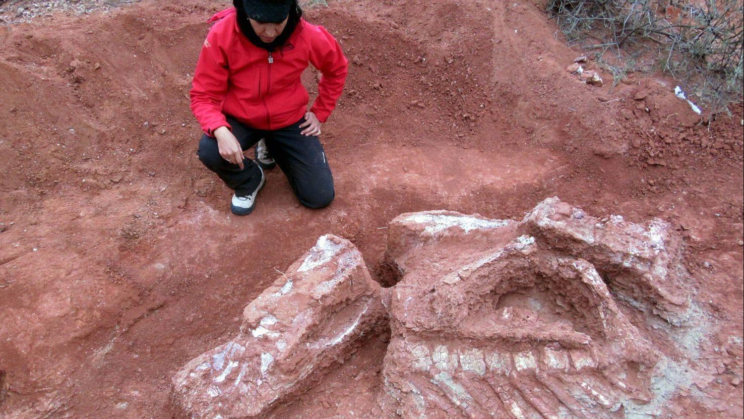 Argentina phát hiện hóa thạch khủng long có niên đại hơn 200 triệu năm