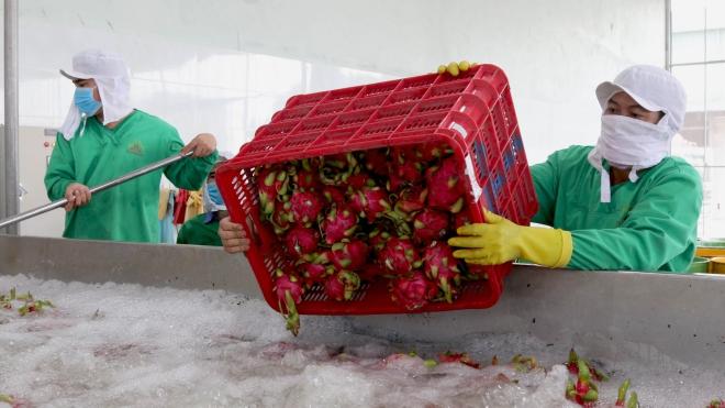 Dịch COVID-19: Chia sẻ kinh nghiệm kinh doanh chế biến và tiêu thụ nông sản