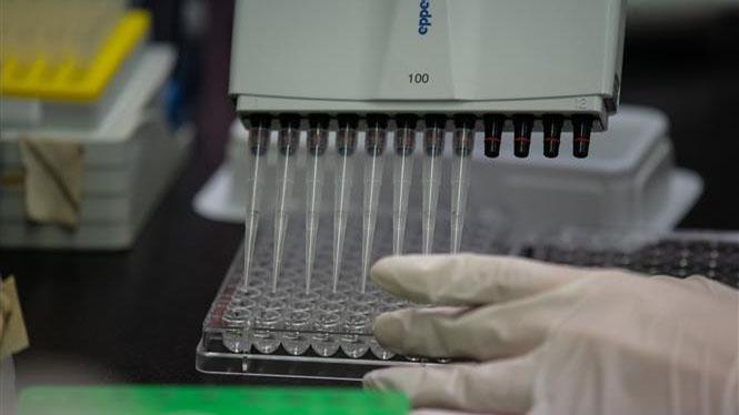 Dịch COVID-19: WHO dự báo vaccine sẽ phổ biến vào giữa năm sau