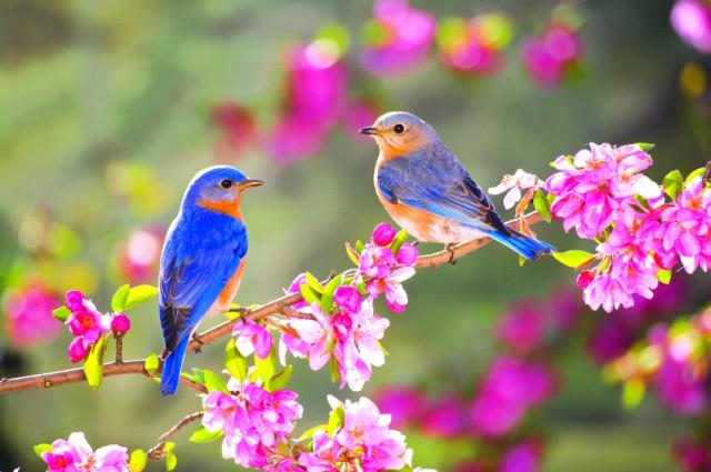 Ngày Hạnh phúc, Ngày Quốc tế Hạnh phúc, Ngày Hạnh phúc là ngày gì, Ngày hạnh phúc là ngày nào, ngày quốc tế hạnh phúc là ngày nào, nguồn gốc ngày hạnh phúc, ngày 20/3